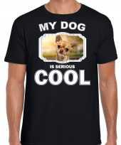 Chihuahua honden my dog is serious cool zwart heren t shirt 10246376